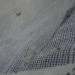 ยุงที่นำไปใส่ไว้ในเส้นใยมุ้งที่มีผสมสารฆ่ายุง ทยอยตายหลายตัว